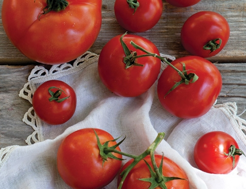 12 Recipes for Bountiful Summer Tomatoes