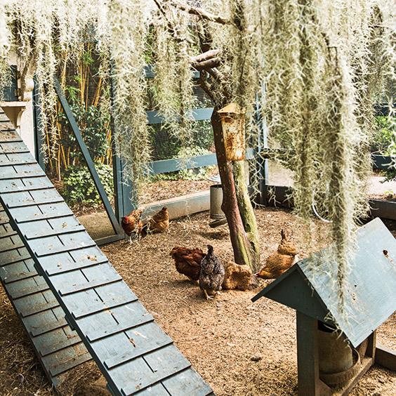 Paula Deen's chicken coop
