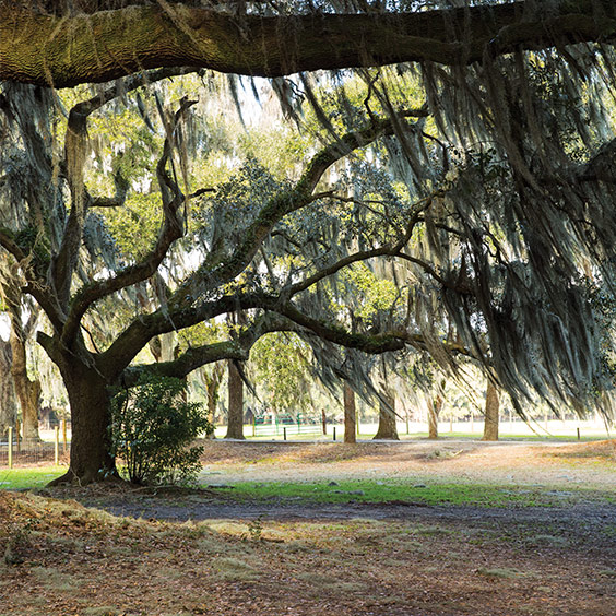 Tour the City of Savannah